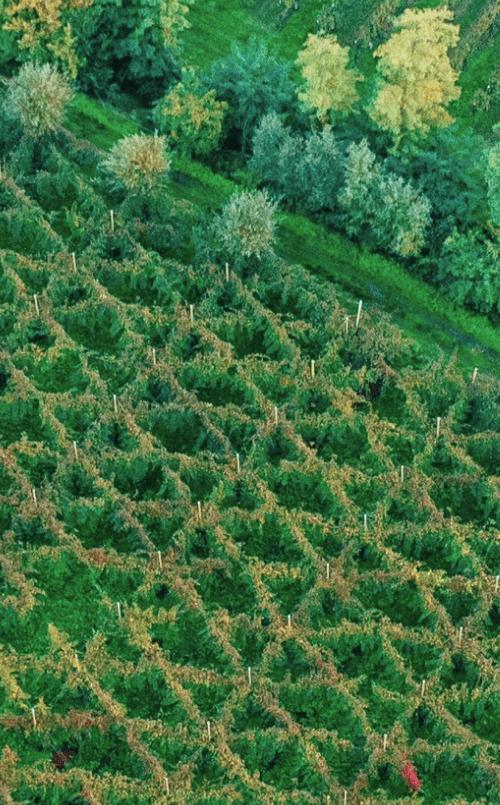 Azienda Ca' di Rajo vitigni autoctoni